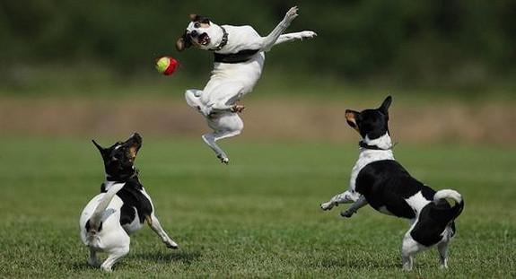 Spennende lederrolle i hundeeiernes organisasjon NKK
